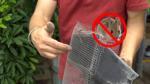 Tự chế lưới ngăn chuột vào xe ô tô cực đơn giản